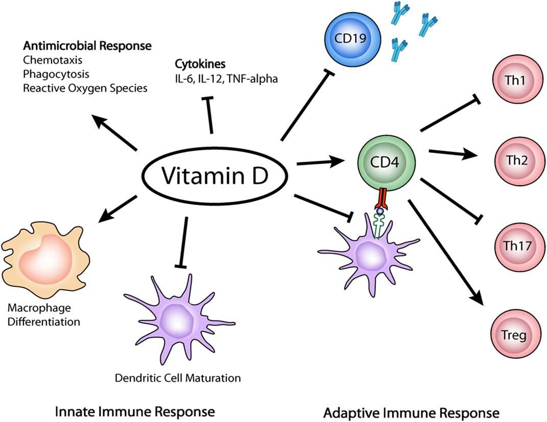 Vitamin D Therapy